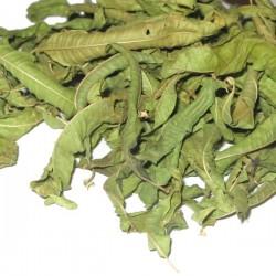 Cedrón - Verbena odorosa Bio