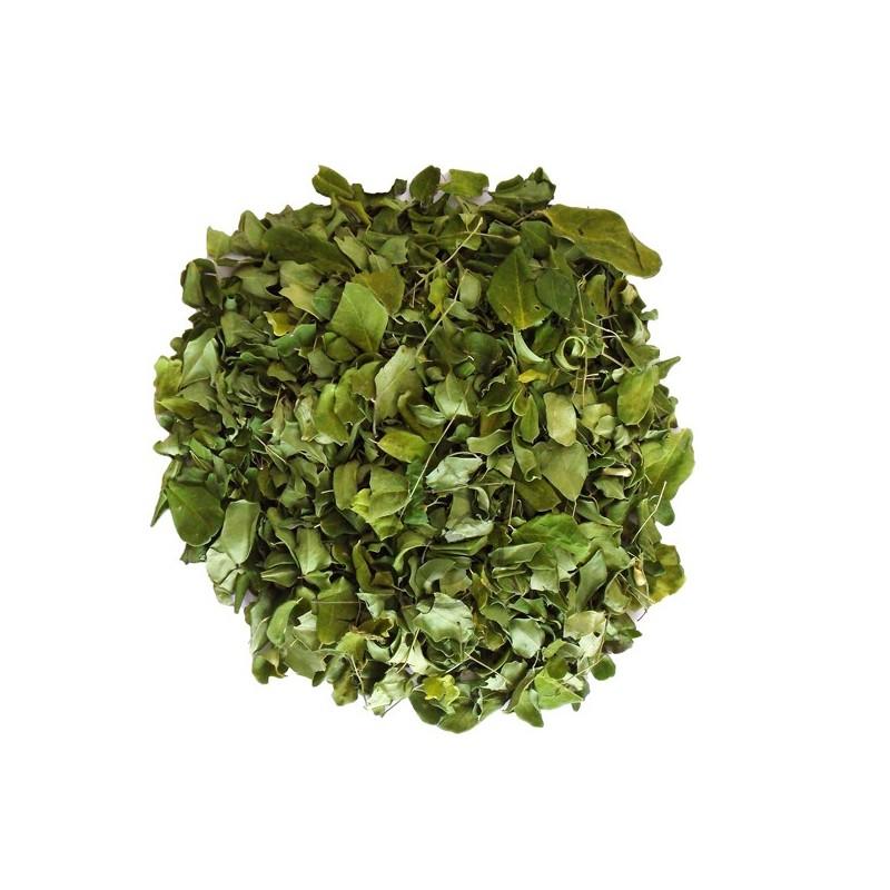 Moringa (feuilles entières) Bio - YerbaMate.ch